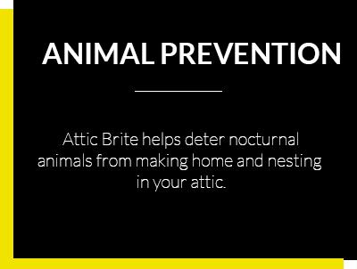 Attic Bright - Animal Prevention